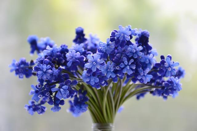 modré květinky.jpg